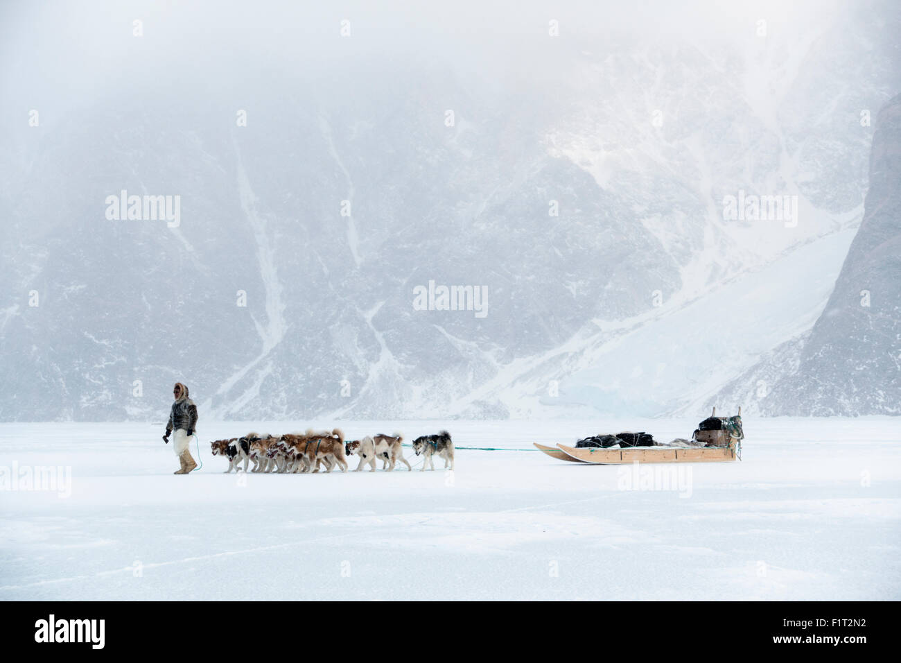 Inuit hunter walking his dog team on the sea ice in a snow storm, Greenland, Denmark, Polar Regions - Stock Image