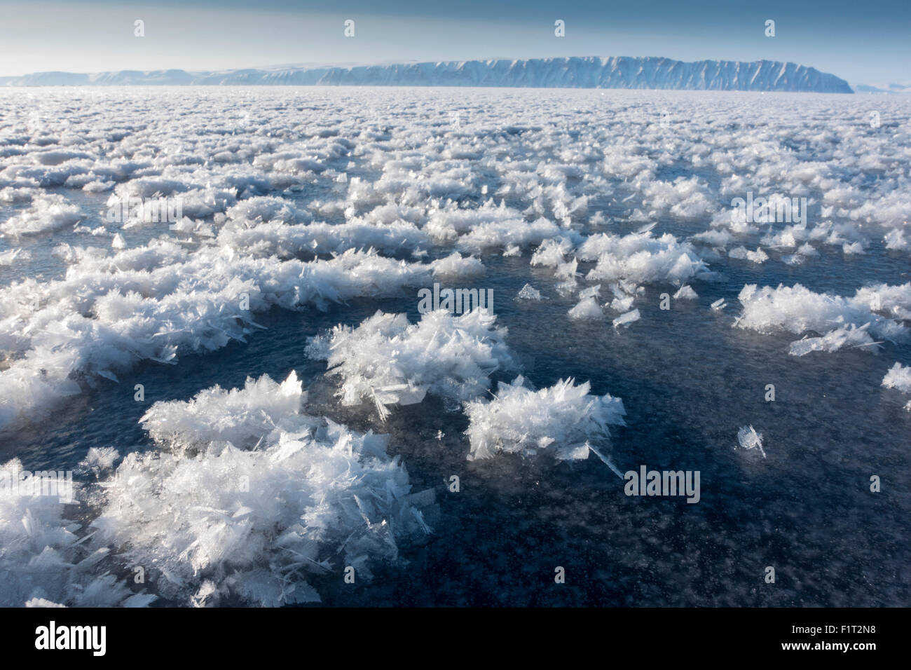 Frost flowers formed on thin sea ice when the atmosphere is much colder than the underlying ice, Greenland, Denmark - Stock Image