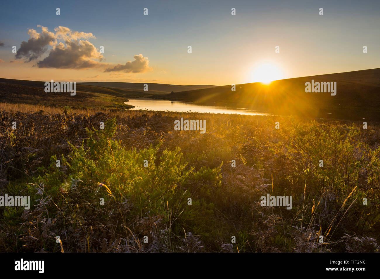 Little lake at sunset, Nyika National Park, Malawi, Africa - Stock Image