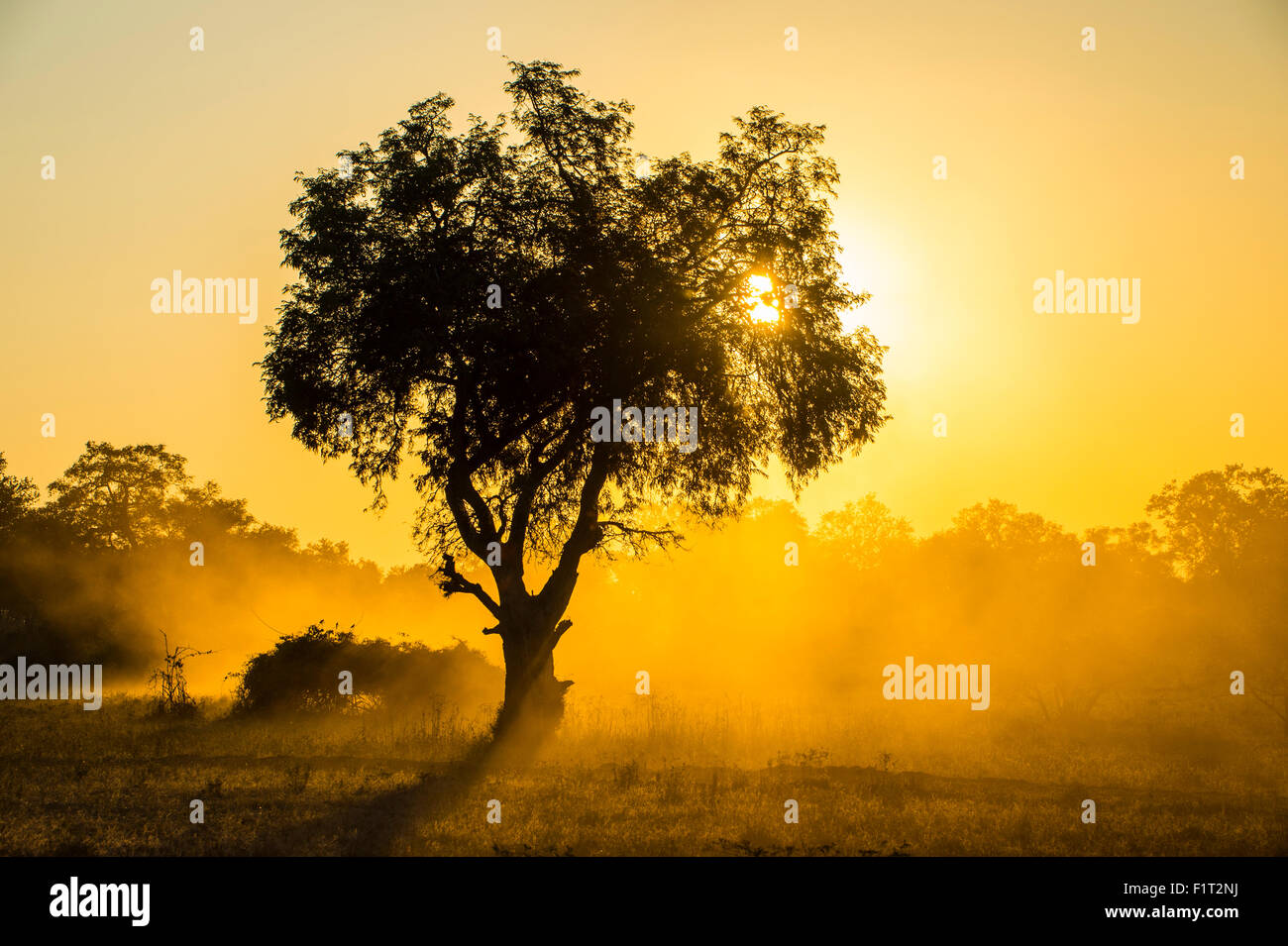 Dust in backlight at sunset, South Luangwa National Park, Zambia, Africa - Stock Image