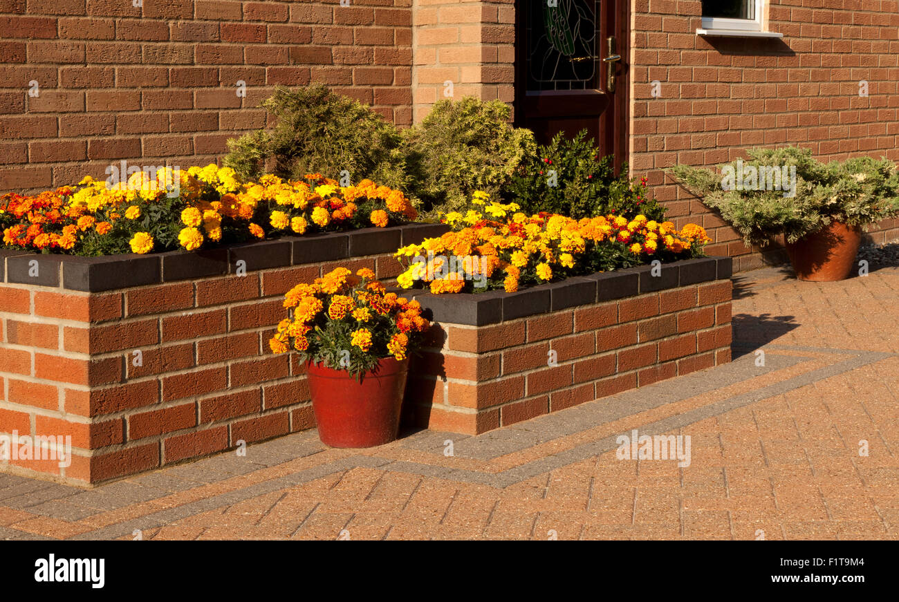 Raised Flower Bed on a Patio with Pots in Norfolk England, UK - Stock Image