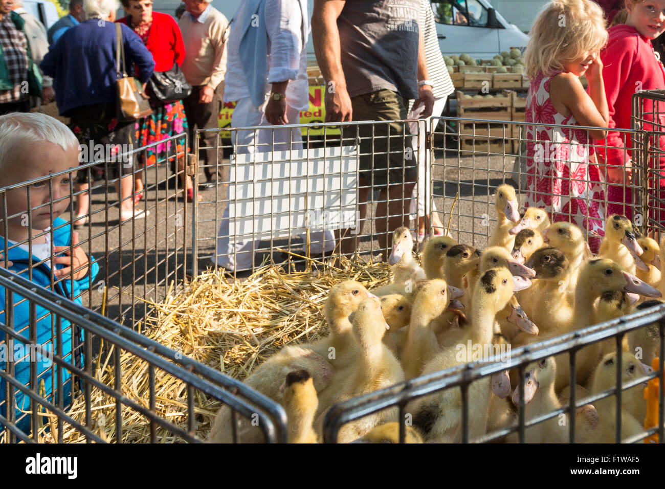Poultry at Rouillac, Charente Maritime, south west France - Stock Image
