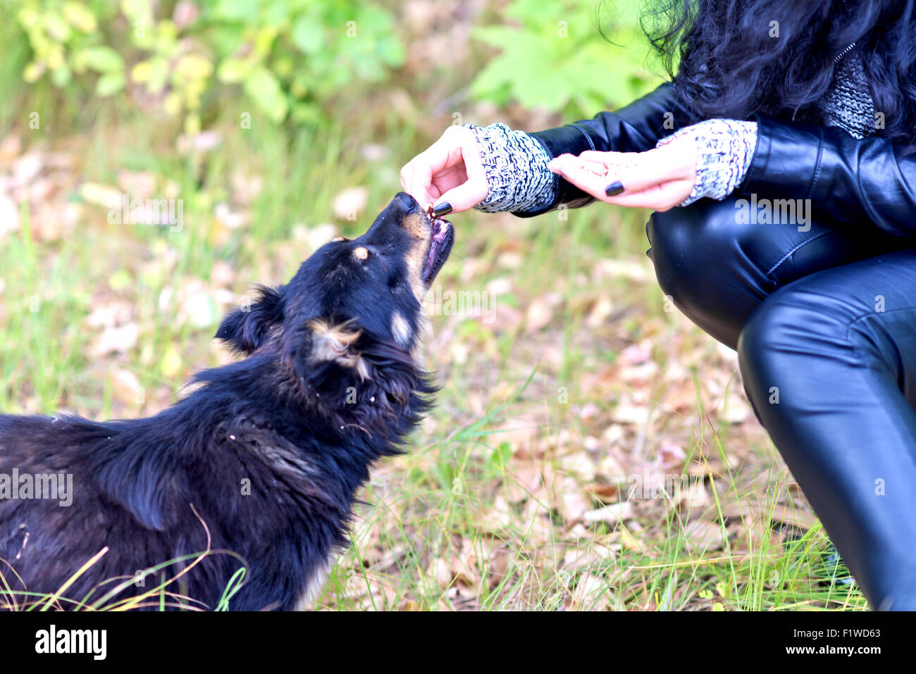 woman feeding dog in park - Stock Image