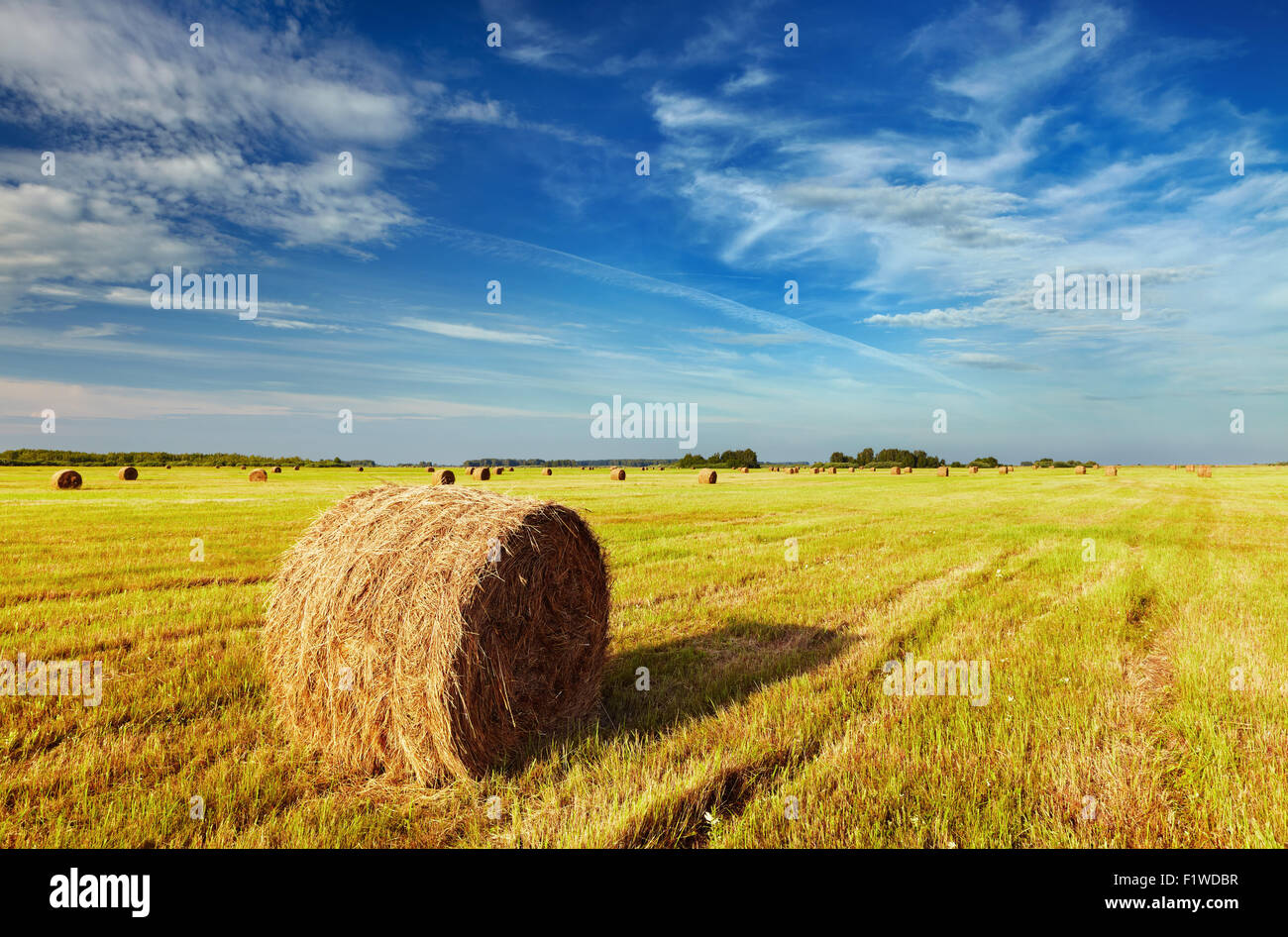 Mown field with straw bales - Stock Image