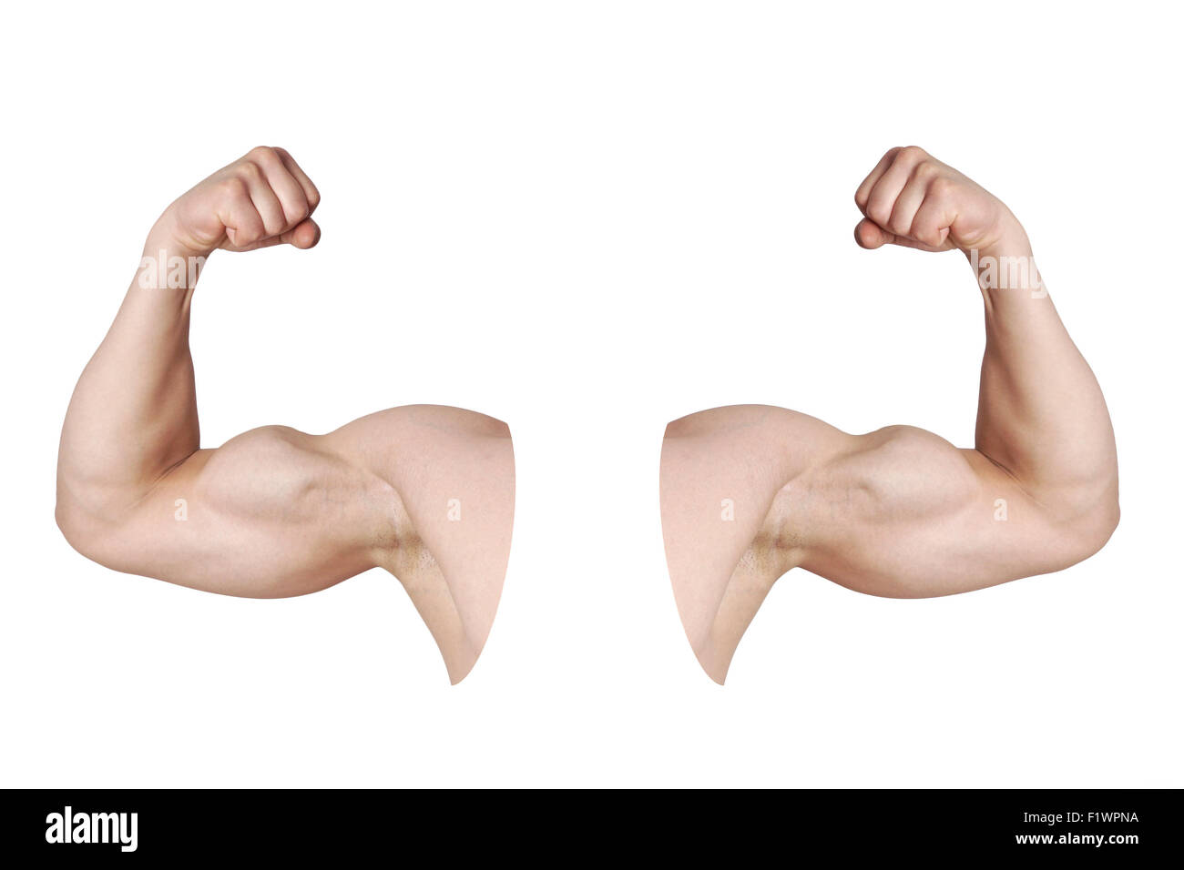 male arms with flexed biceps muscles - Stock Image