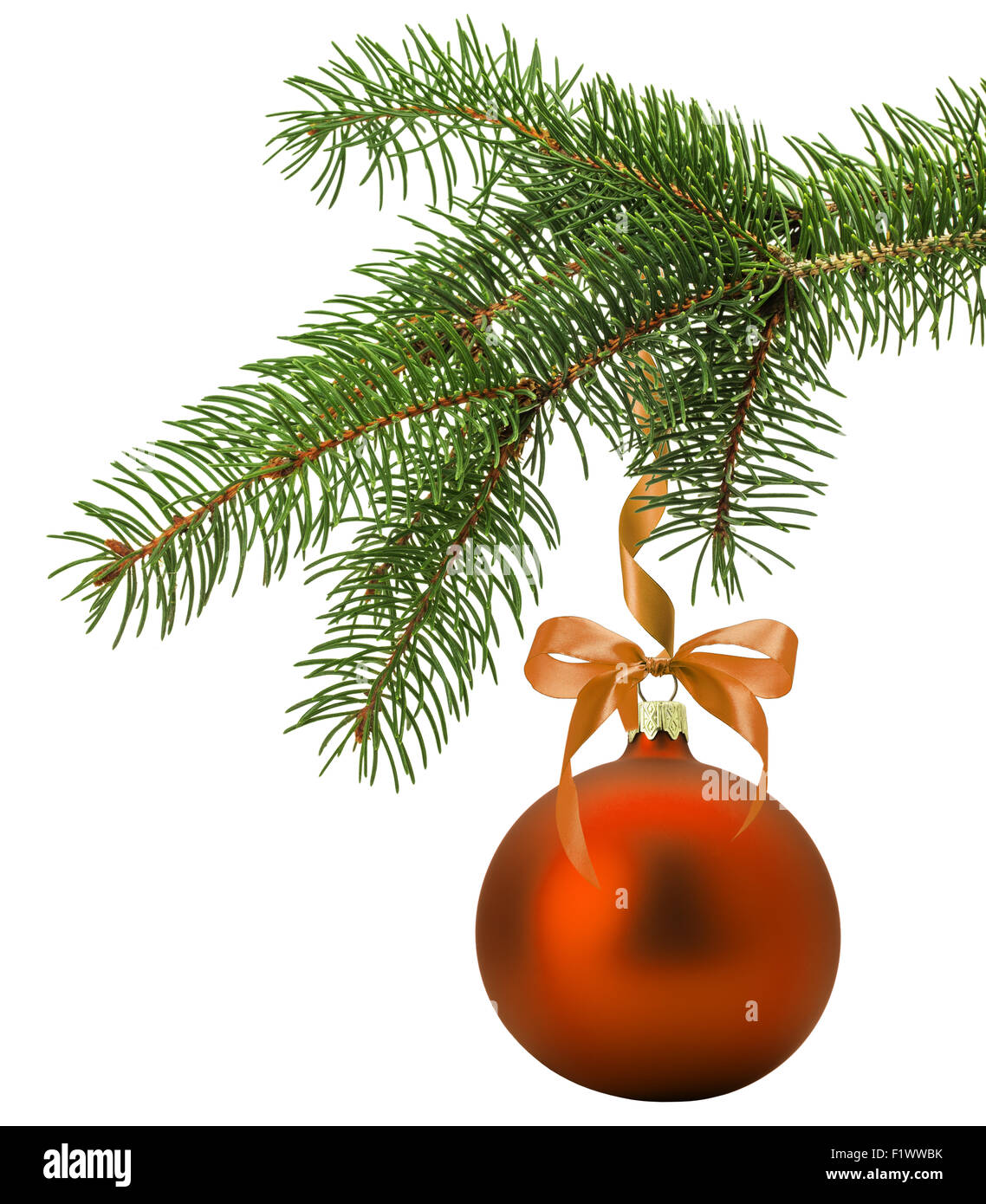Christmas tree branch with orange ball isolated on the ...