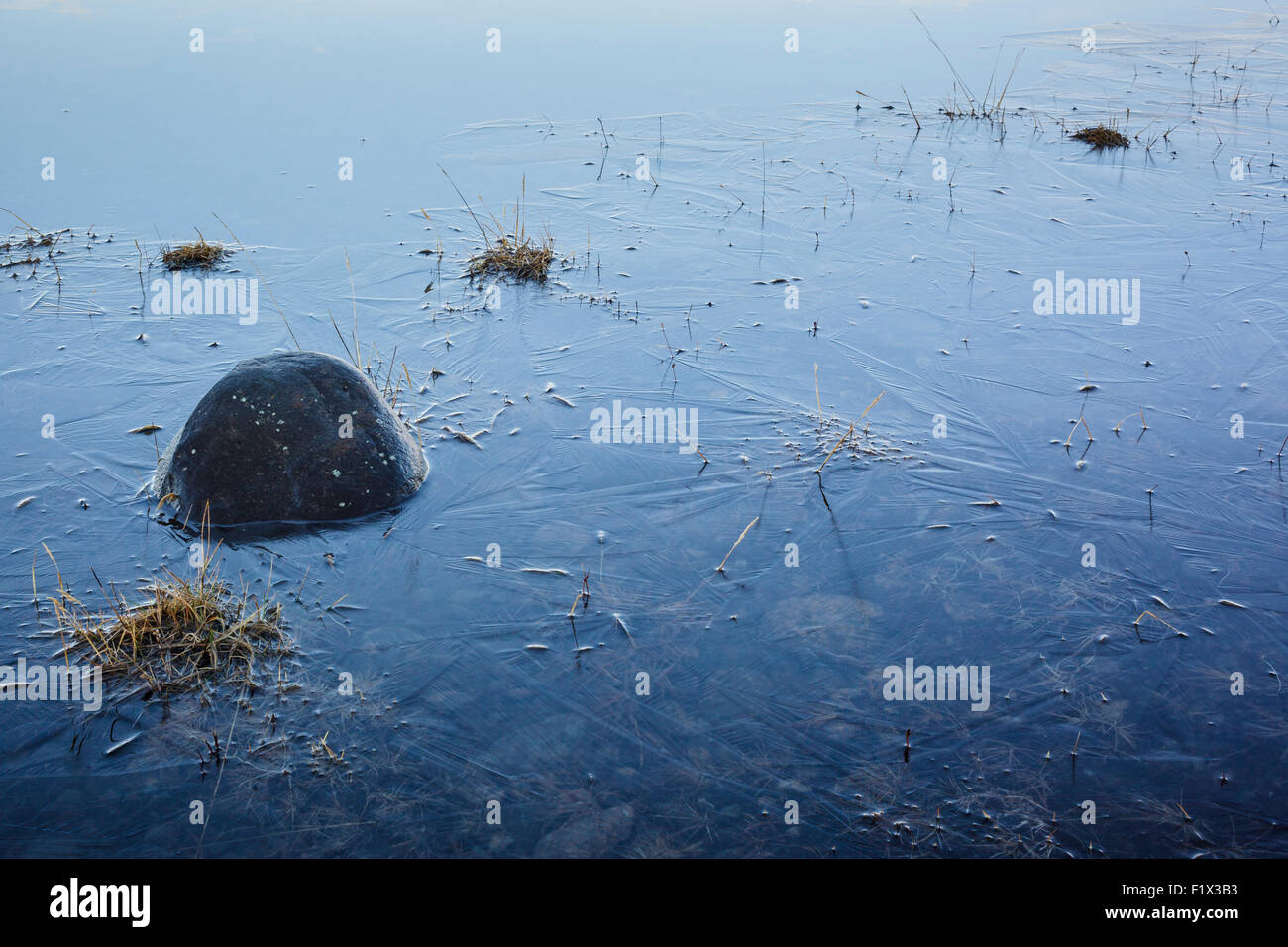 Vegetation captured in the ice of small lake. Southern Iceland. - Stock Image