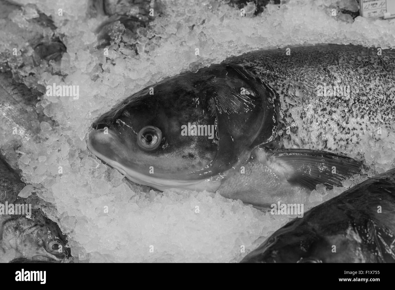 fish on the ice. - Stock Image