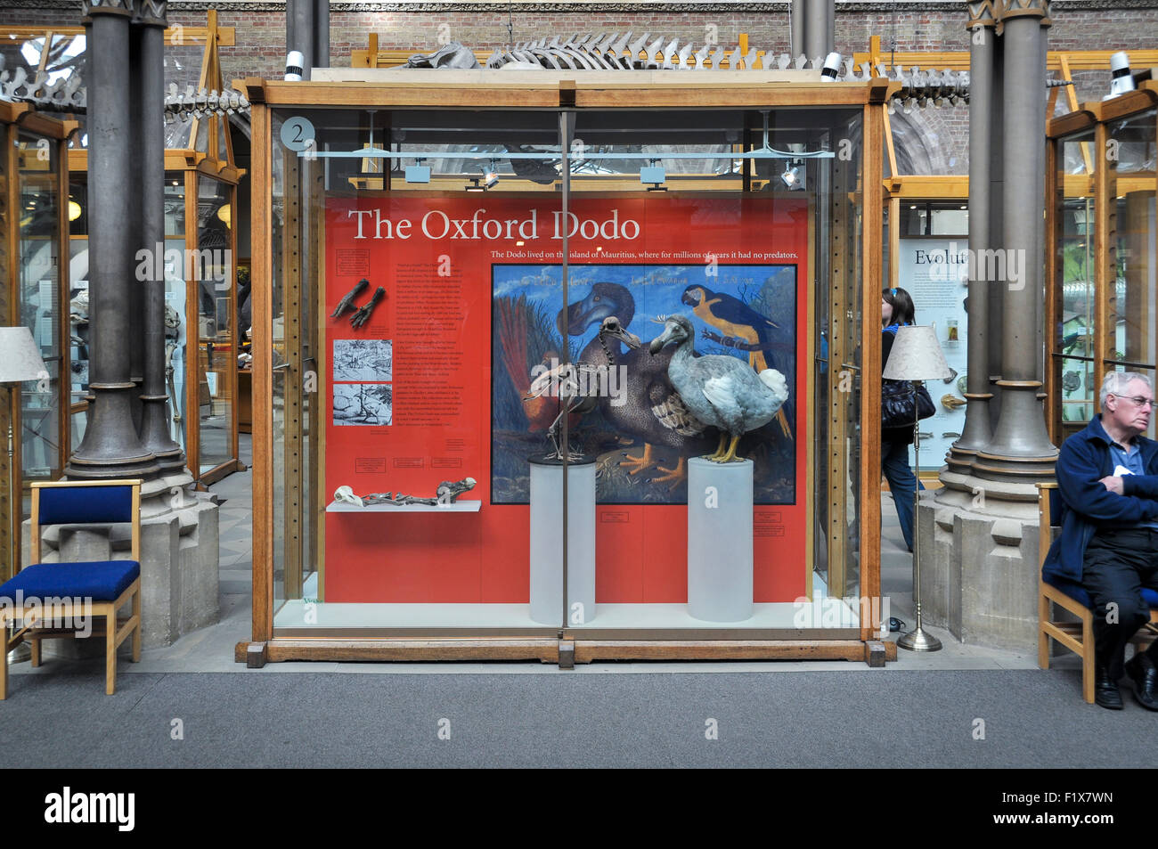 The Oxford Dodo at the Museum if Natural History, Oxford, United Kingdom - Stock Image