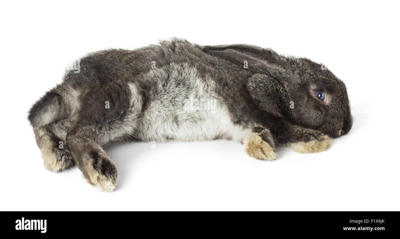 Rabbit on a white background. - Stock Image