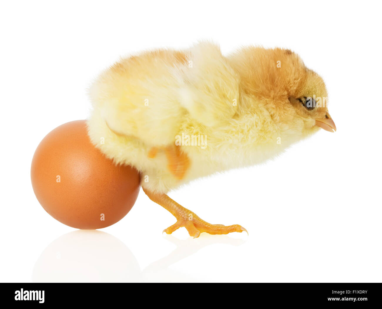 Chick and egg on white background. - Stock Image