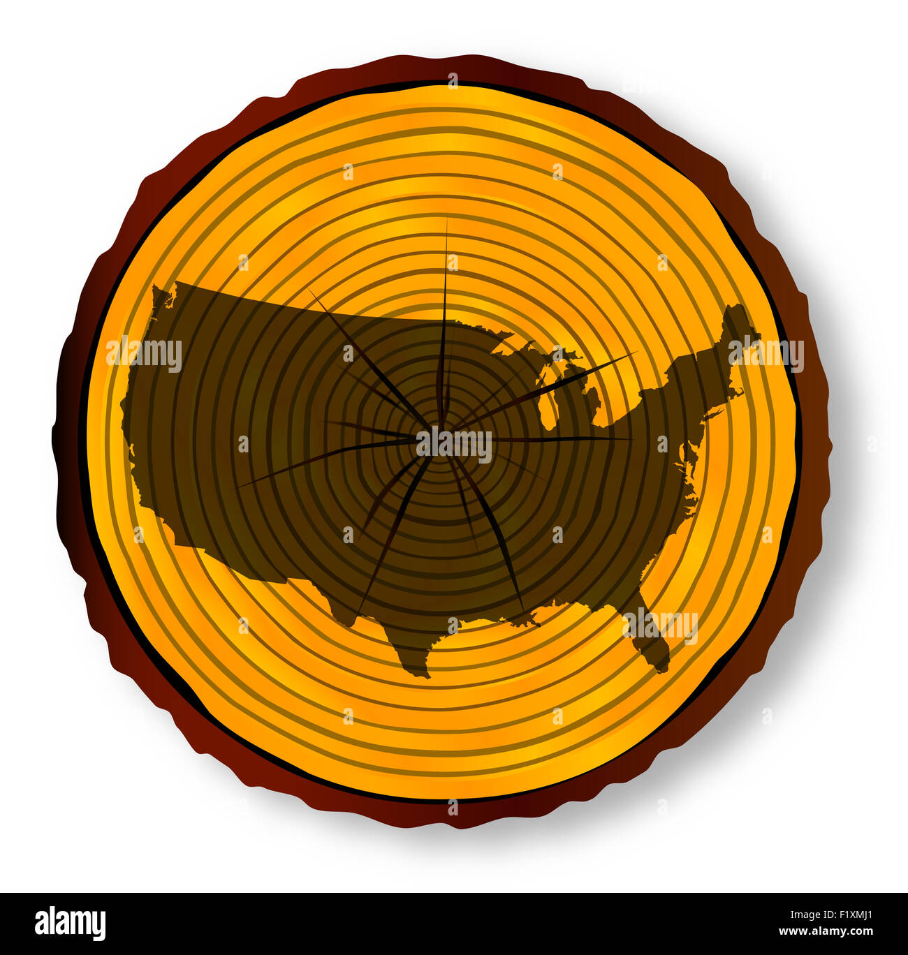 Map of The Unites States of America on a timber end section over a white background - Stock Image
