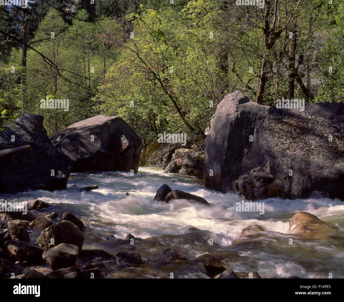 Mountain Stream - Stock Image