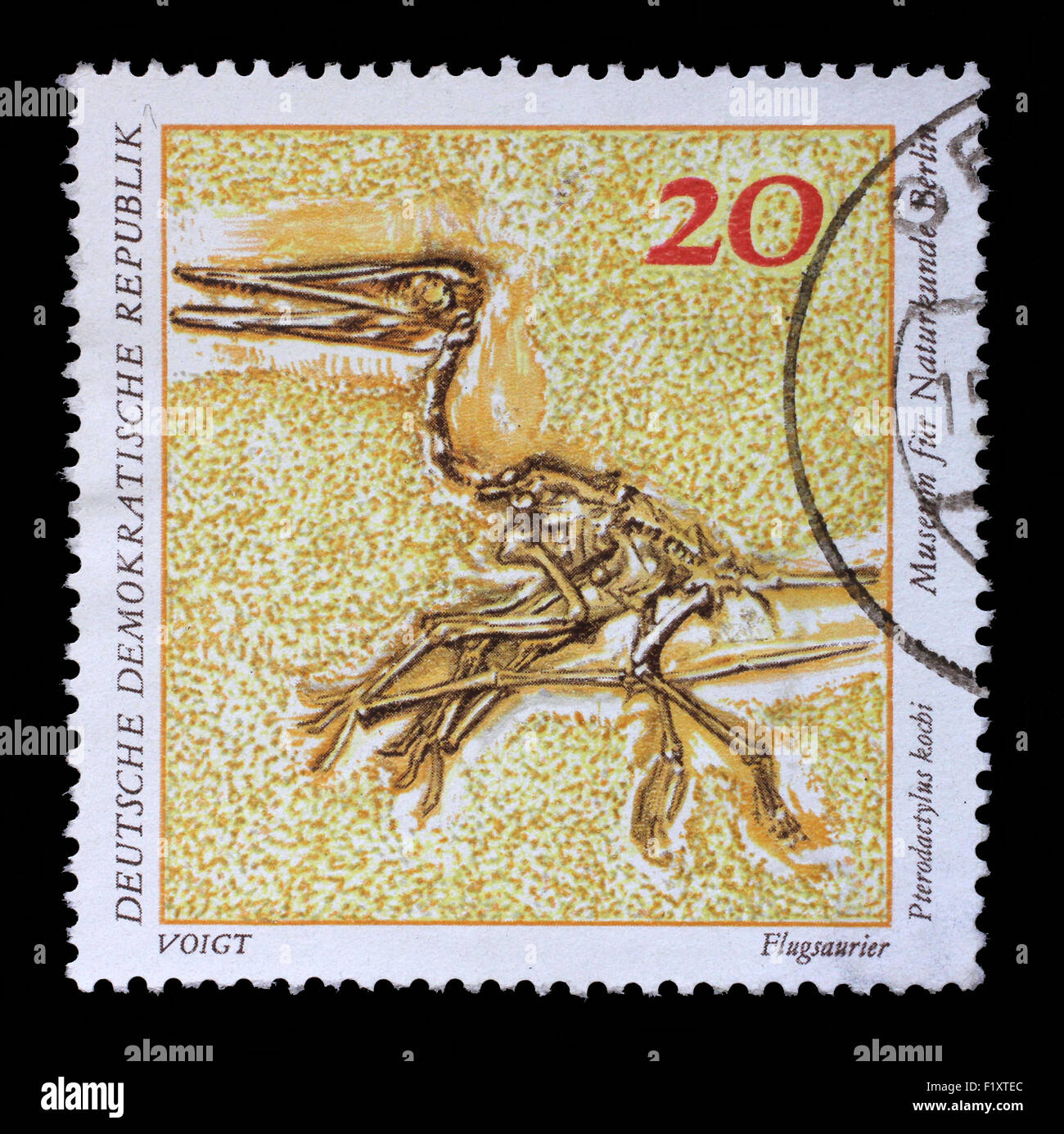 GDR-CIRCA 1973: A stamp printed in GDR shows Pterodactylus kochi, Natural History Museum Pieces, circa 1973. - Stock Image