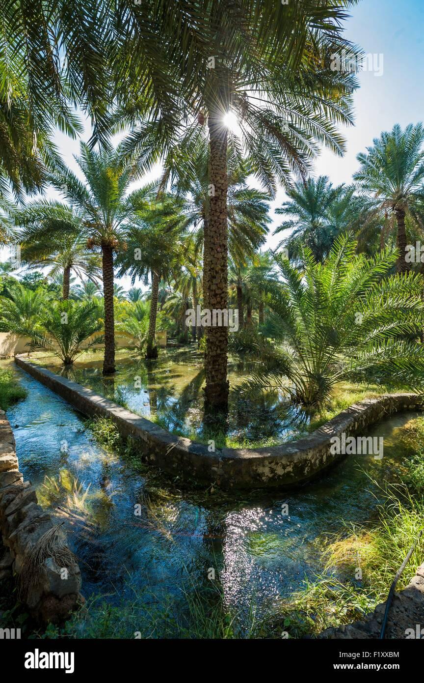 Oman, Djebel Shams, Al Hamra, old village and palm grove - Stock Image