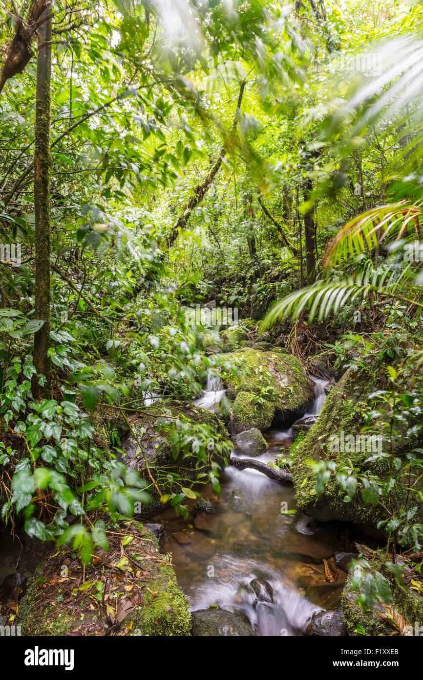 Costa Rica, Puntarenas province, Monteverde Cloud Forest, Reserva Biologica del Bosque (biological reserve of the Stock Photo