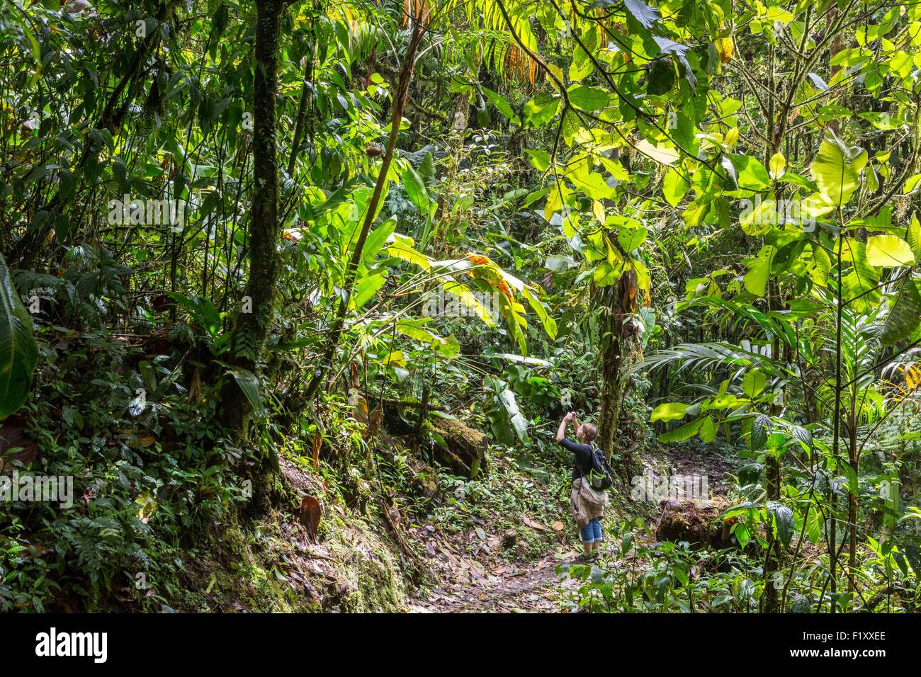 Costa Rica, Puntarenas province, Monteverde Cloud Forest, Reserva Biologica del Bosque (biological reserve of the Stock Photo