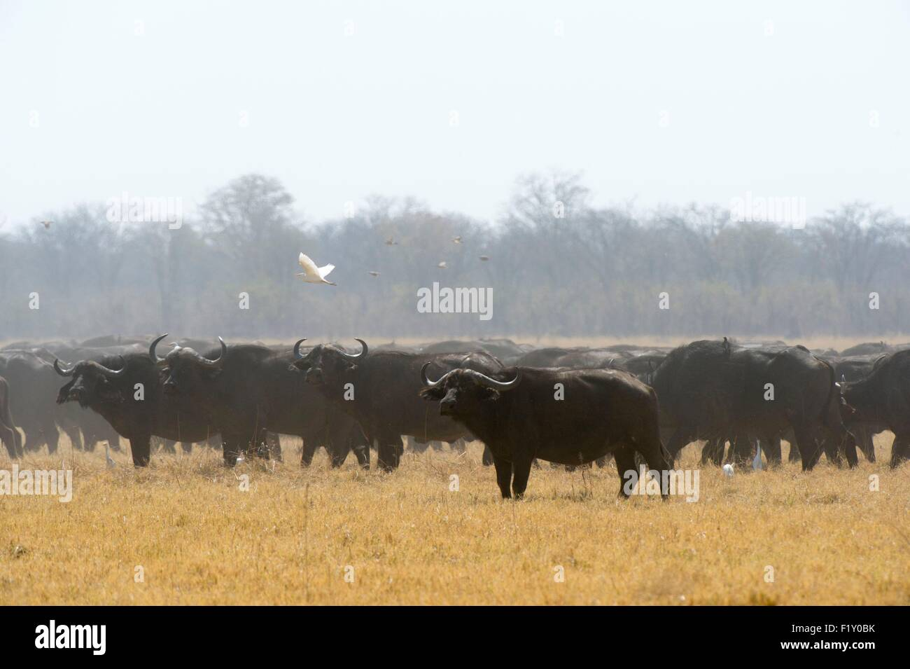 Botswana, Chobe National Park, Savuti Marsh Stock Photo