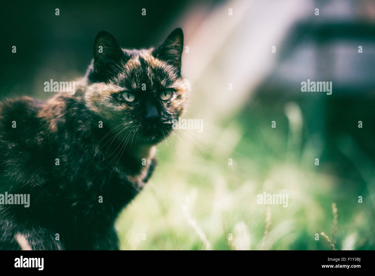 Film style grainy shot of domestic cat - Stock Image