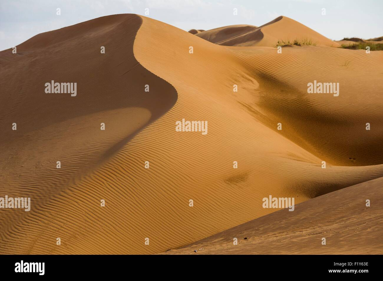 Oman, Sharquiyah Sands the Eastern Sands, crossing south north, sand dunes - Stock Image
