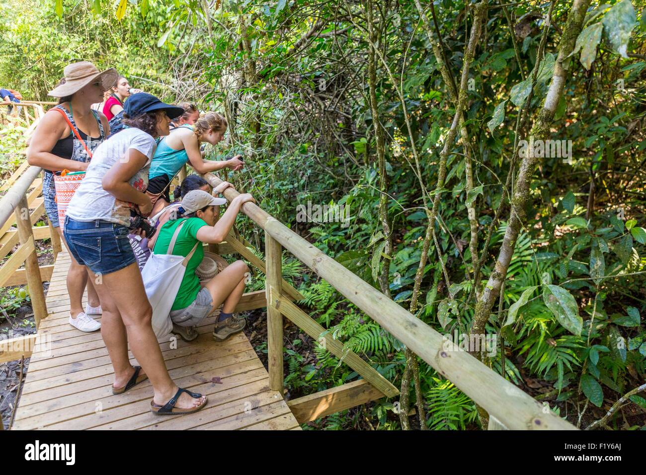 Costa Rica, Puntarenas province, Manuel Antonio National Park, tourists observing animals Stock Photo