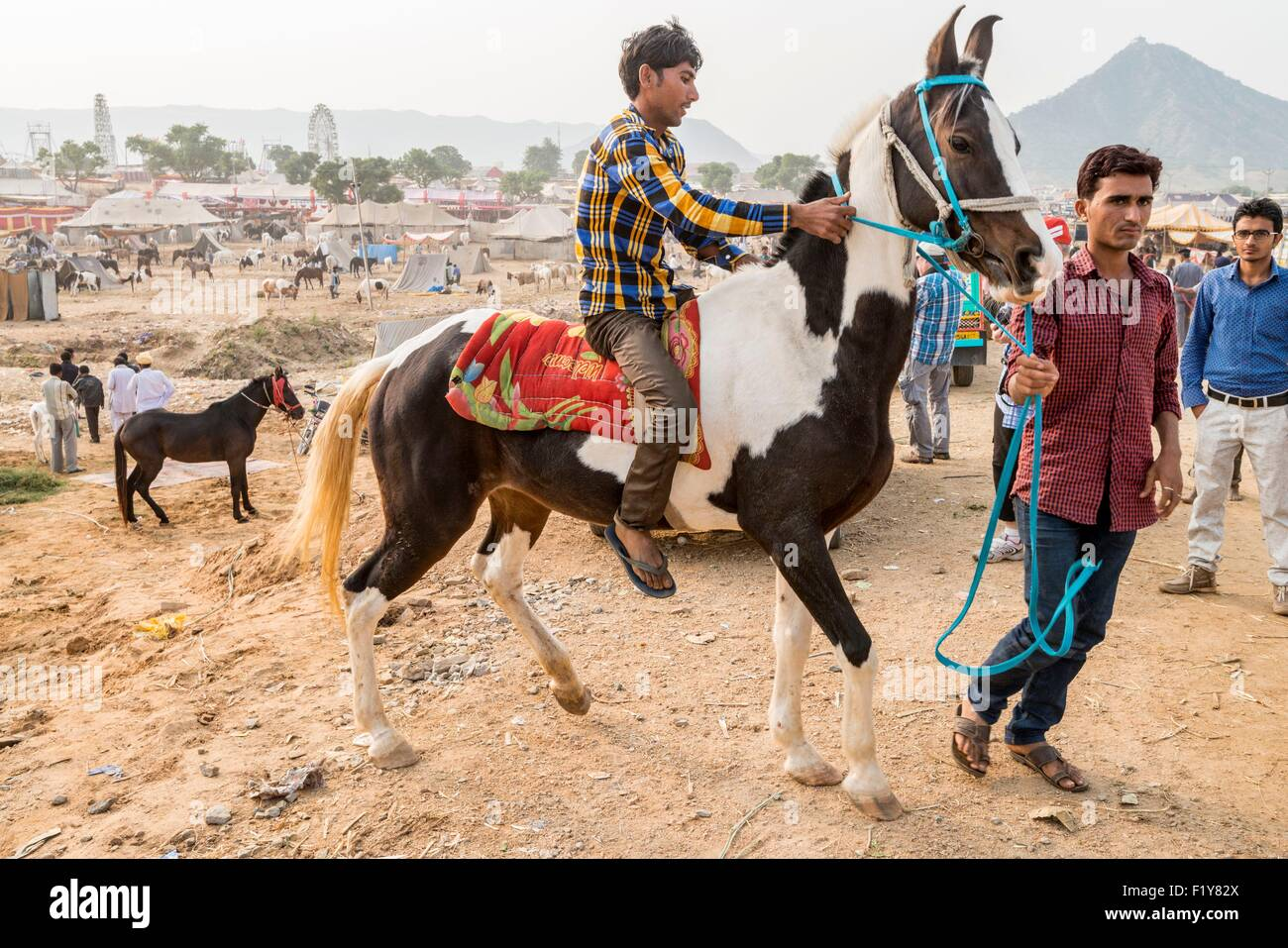 Marwari Horses High Resolution Stock Photography And Images Alamy