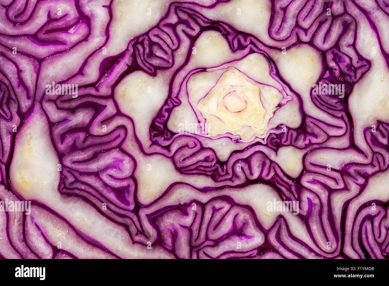 Detail,Canada,Red Cabbage,Extreme Close Up - Stock Image