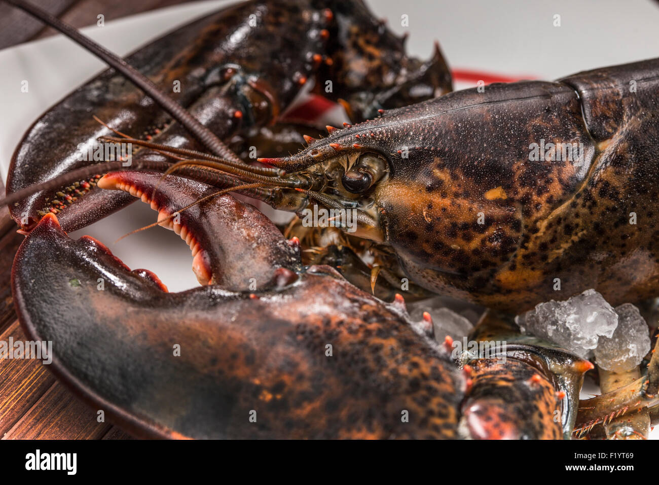 raw lobster - Stock Image
