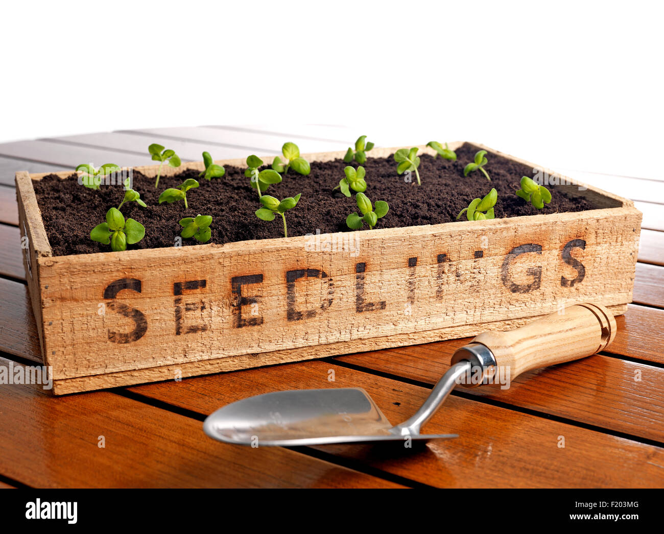 Seedling tray filled with soil - Stock Image
