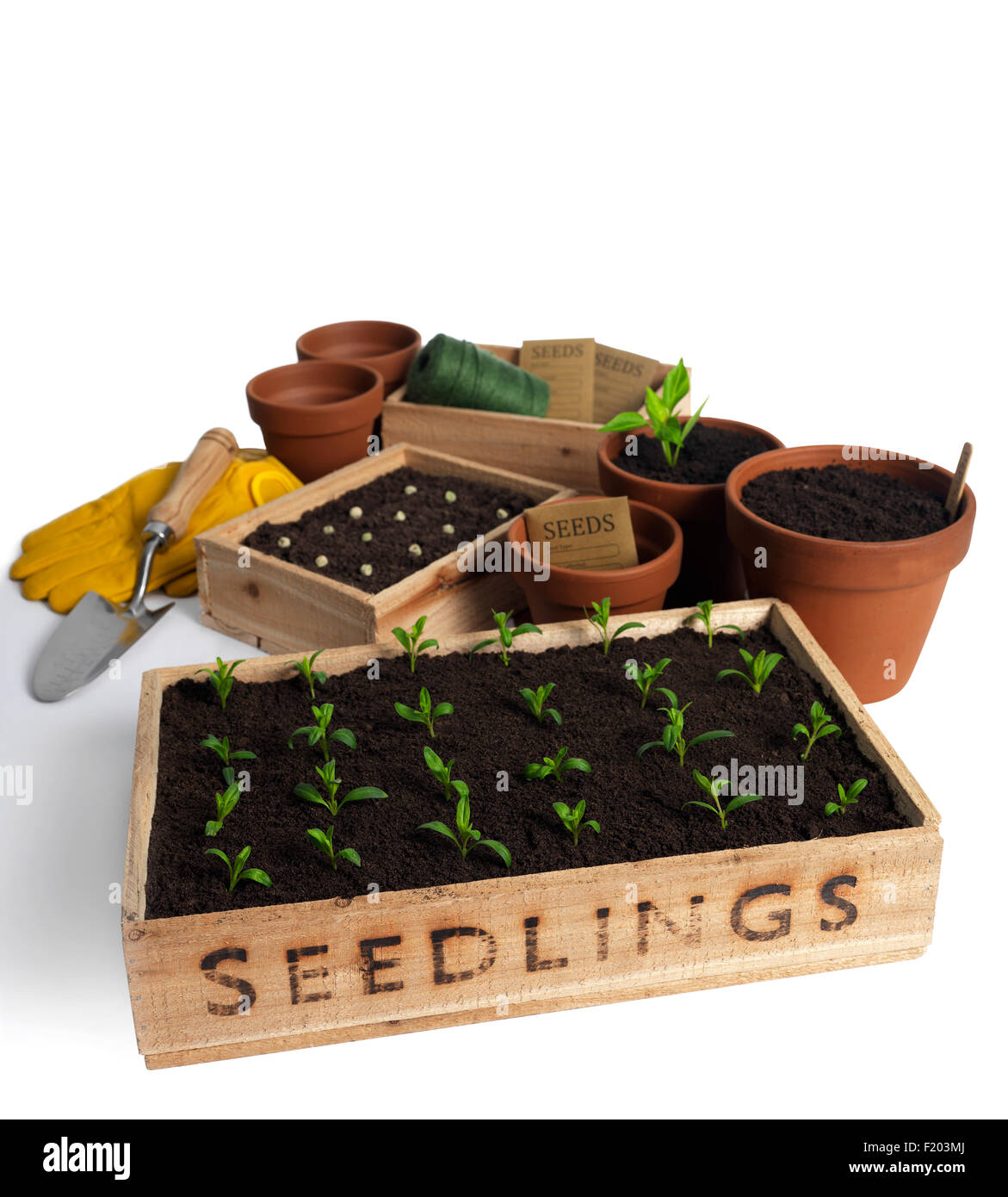 seedling tray with gardening tools isolated on white - Stock Image