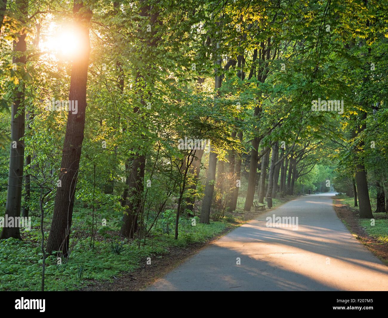 Weg im Park im Gegenlicht - Stock Image