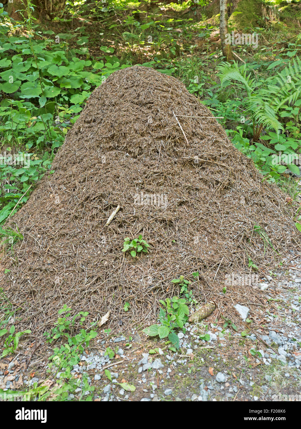 Ameisenhaufen - Stock Image