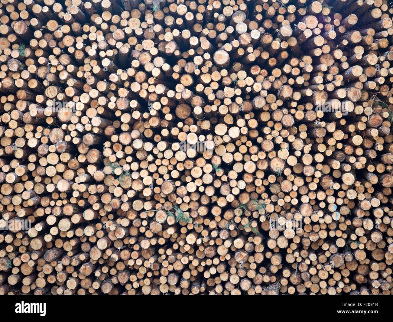 Holzstapel aus Fichtenstämmen bildfüllend - Stock Image