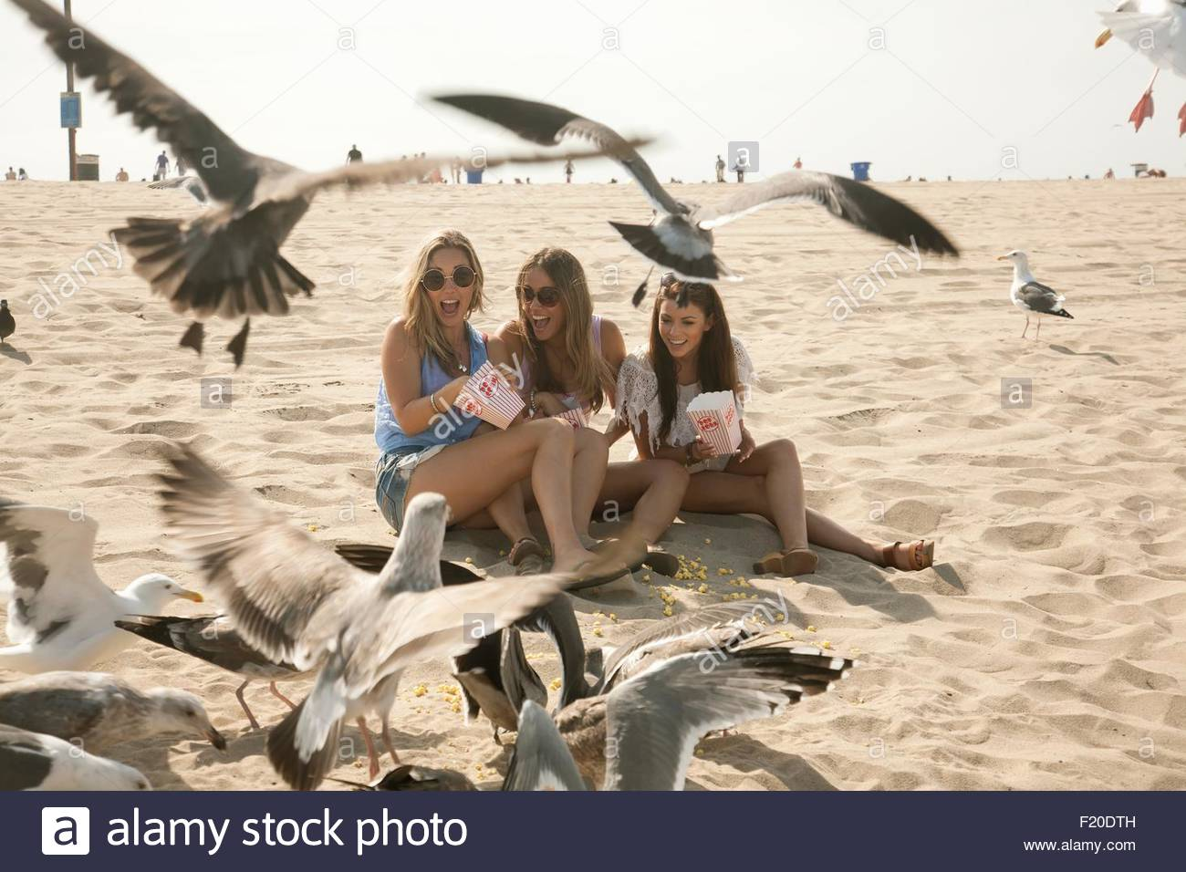 Three young women, sitting on beach, surrounded by seagulls - Stock Image