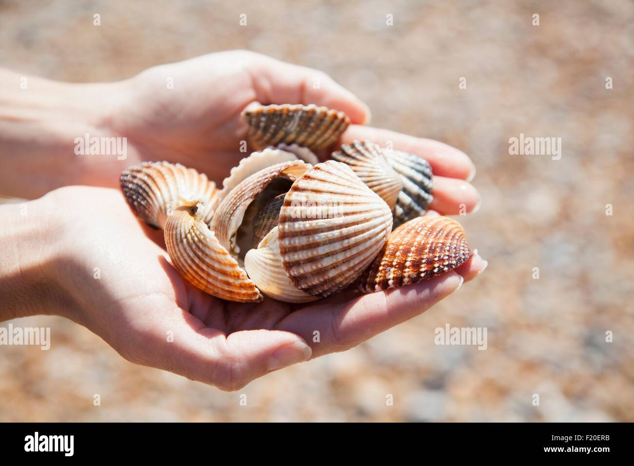 Close up of womans cupped hands holding collection of seashells Stock Photo