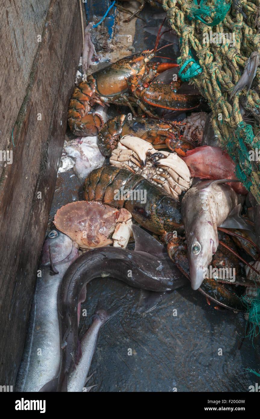 Maine Lobster Fishermen On Lobster Stock Photos & Maine Lobster Fishermen On Lobster Stock ...