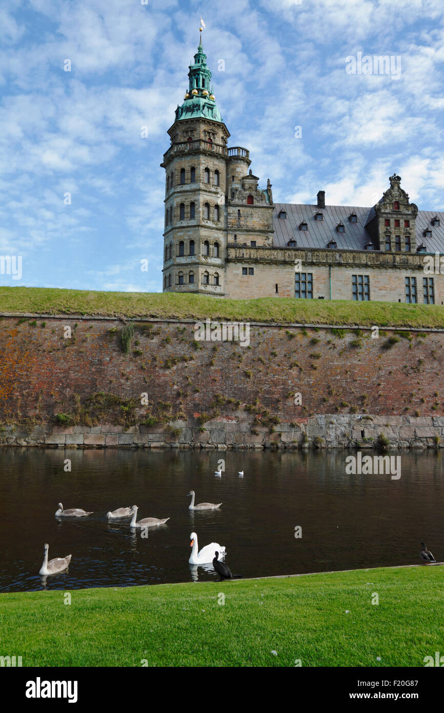 Swans and a cormorant in the moat and Kronborg Castle in the background - Stock Image
