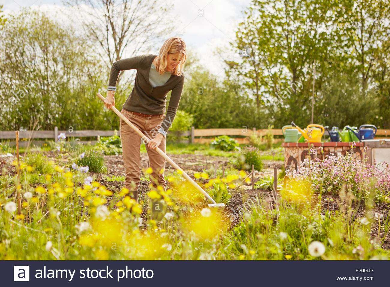 Mature woman, outdoors, gardening, raking soil - Stock Image