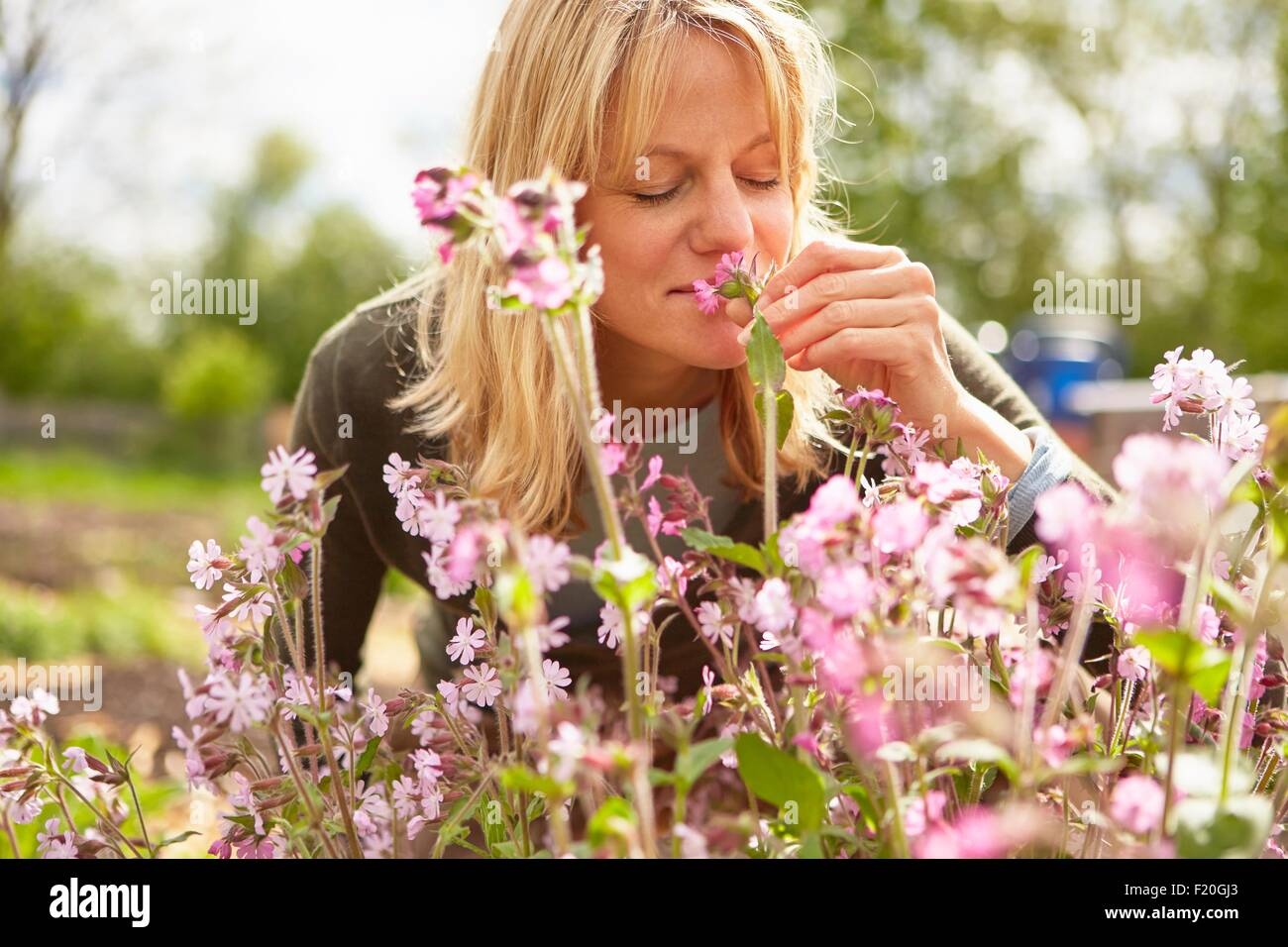 Mature woman, outdoors, smelling flowers - Stock Image