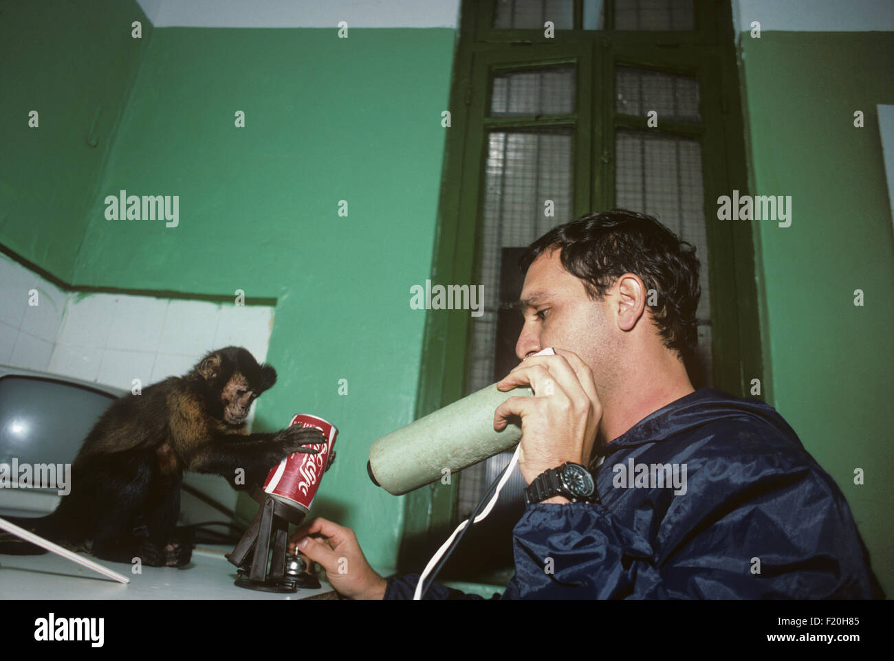 Capuchin monkey being trained to feed  paraplegic  / handicapped people, puts soda into holder.  Israel Stock Photo