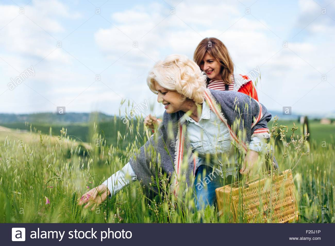 Two mature women looking at long grasses in wheatfield, Tuscany, Italy - Stock Image