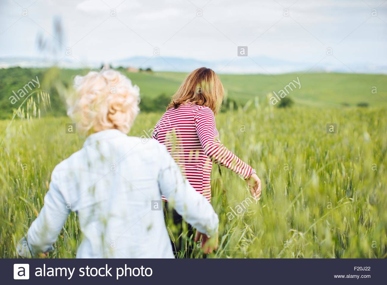 Rear view of two mature female friends walking in wheatfield, Tuscany, Italy - Stock Image