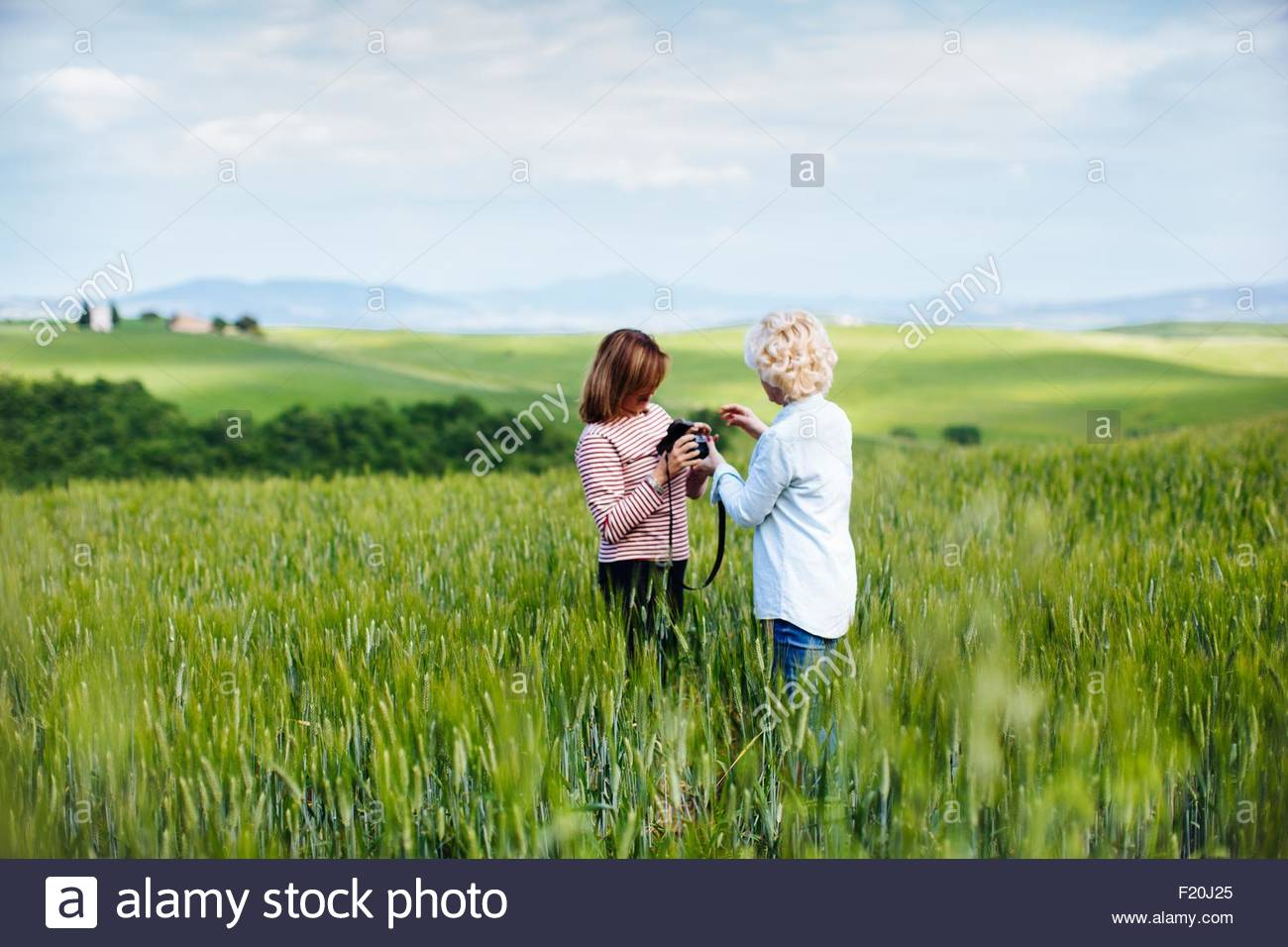 Two mature female friends with digital camera in wheatfield, Tuscany, Italy - Stock Image
