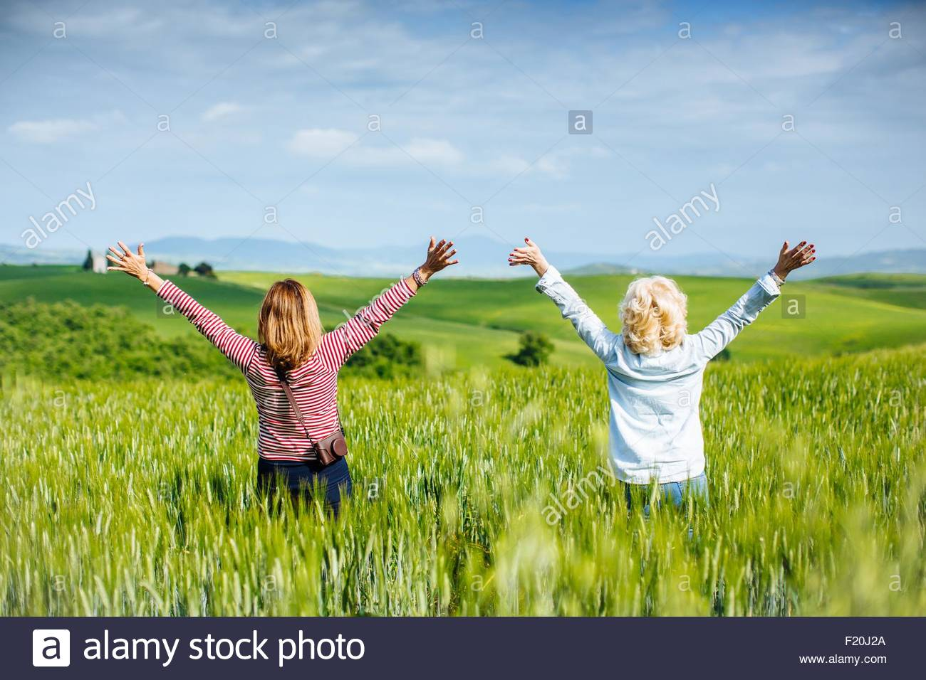 Rear view of mature female friends with arms raised in wheatfield, Tuscany, Italy - Stock Image