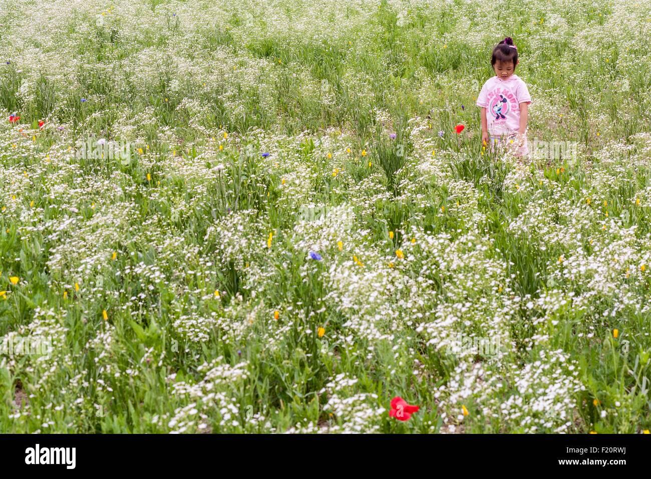 South Korea, Seoul, Songpa-gu, Olympic Park (Olpark), Olympic park built for the 1988 Olympics, flower field - Stock Image