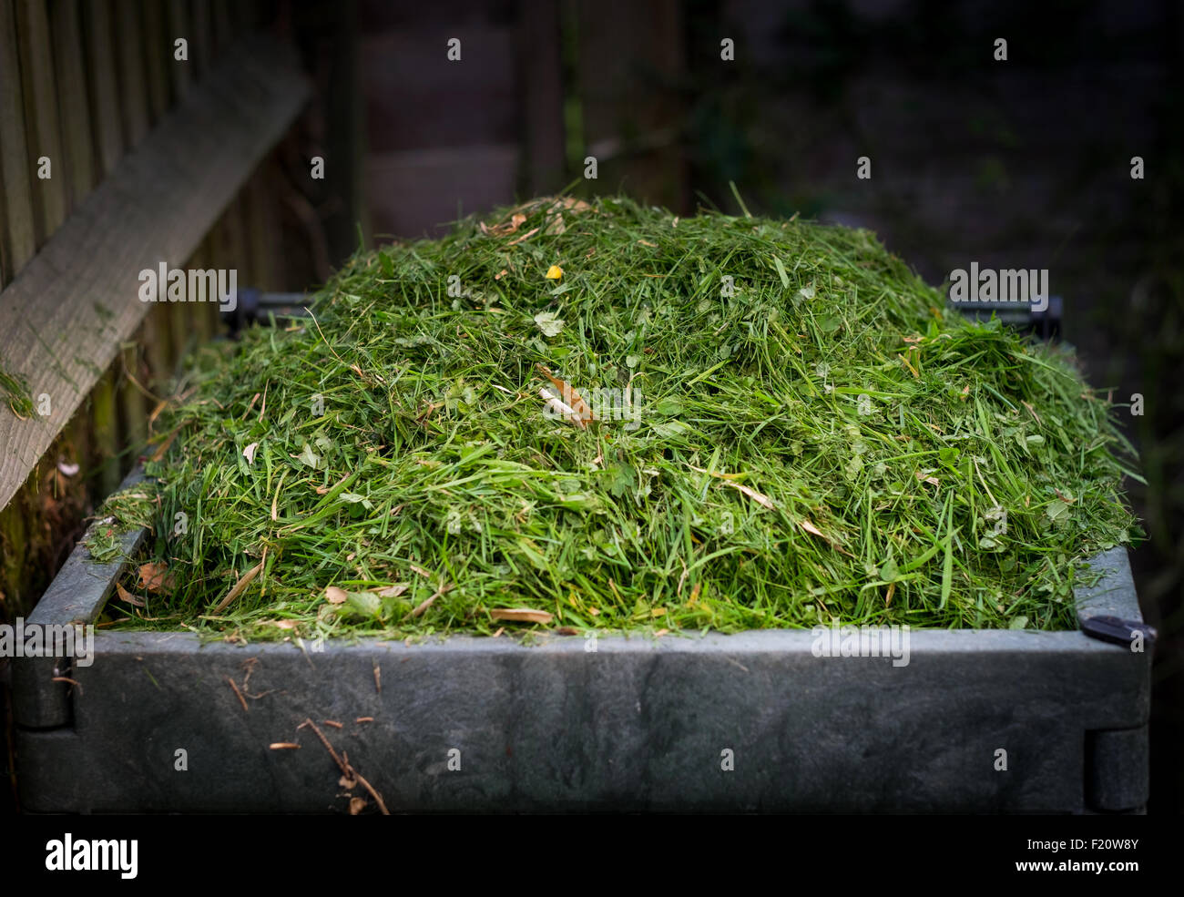 Grass cutting in a compost bin - Stock Image