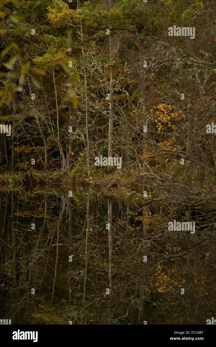 Autumn tree reflections, near Selkirk,Borders,Scotland,UK, - Stock Image