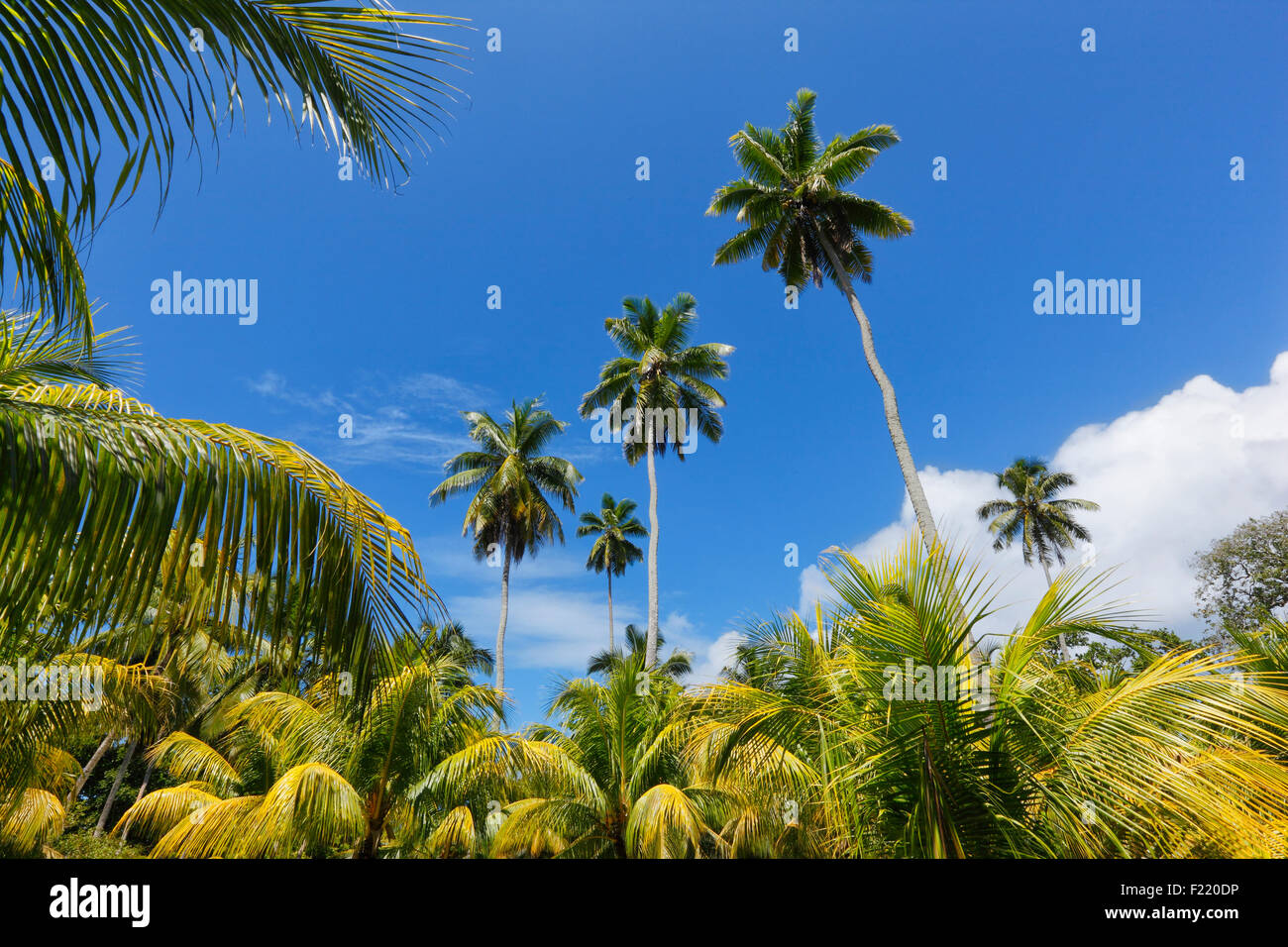 Palm trees in national park on island La Digue, Seychelles. Stock Photo