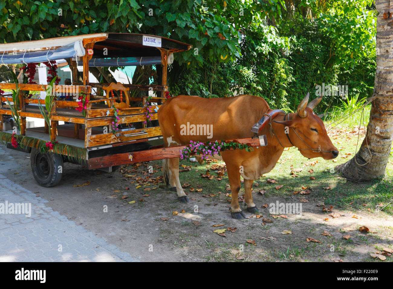 Decorated oxcart, cattle car, Zebu, Seychelles, La Digue. - Stock Image