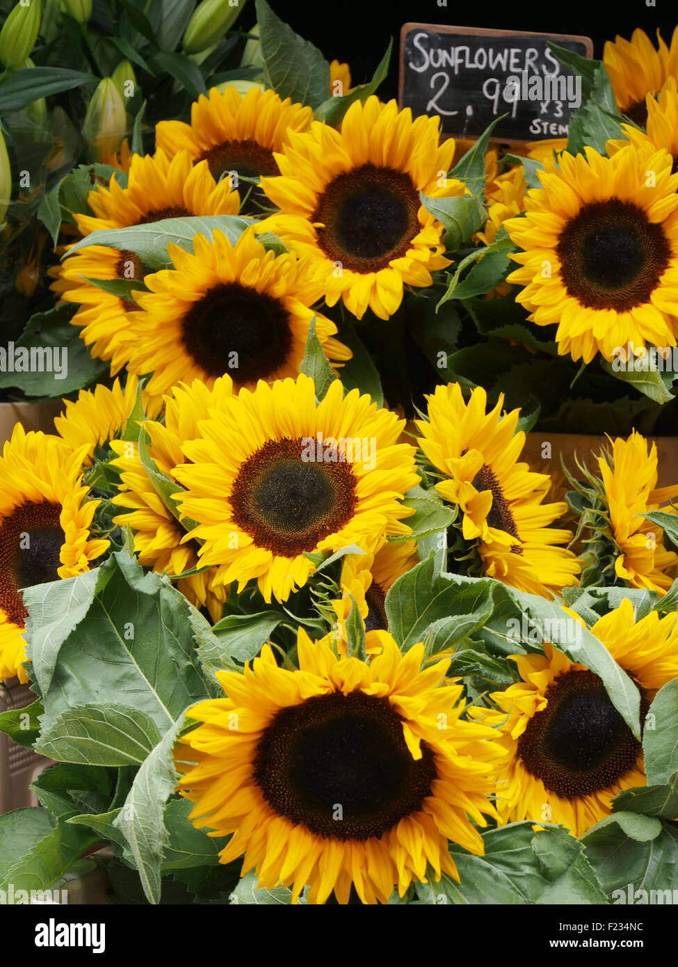 Sunflowers (Helianthus annuus) for sale on a stall in Manchester city centre, UK. - Stock Image